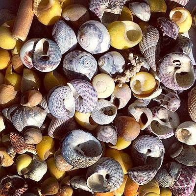 Sunny Photograph - Shells From Brittany by Nic Squirrell