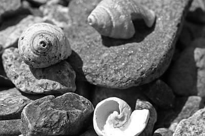 Shells I Art Print by David Rucker