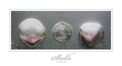 Photograph - Shells by J R Baldini