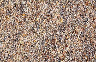 Shells Shells Shells Print by David Lee Thompson