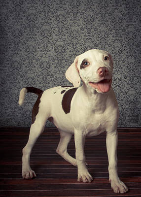 Panting Photograph - Shelter Puppy by Square Dog Photography