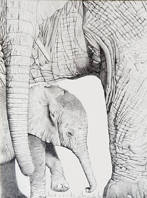 Endangered Drawing - Sheltered by Jill Parry