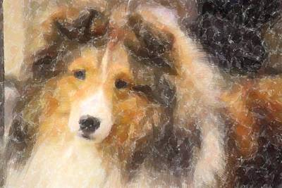 Photograph - Sheltie by Donna G Smith