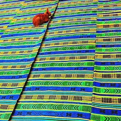 Wallpaper Wall Art - Photograph - #shenkar #cat #carpet #background by Alon Ben Levy