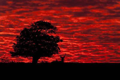 Tree Photograph - Shepherds' Warning by Andy Astbury