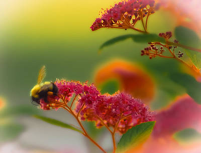 Sherbet Pollination Art Print by DigiArt Diaries by Vicky B Fuller