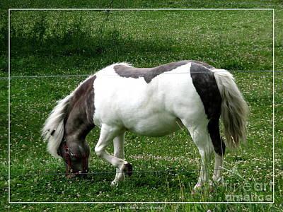 Horse Photograph - Shetland Pony  by Rose Santuci-Sofranko