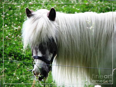 Animals Photograph - Shetland Pony With Oil Painting Effect 2 by Rose Santuci-Sofranko