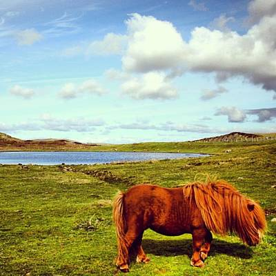 Landscapes Wall Art - Photograph - Shetland's Pony by Luisa Azzolini