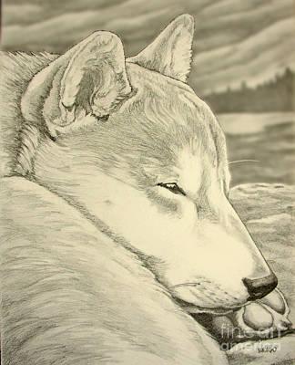 Shiba Inu Art Print by Kim Hunter