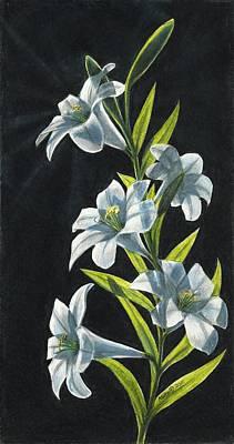 Shine Through- White Lilies Print by Kalen Malueg