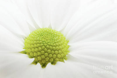 Florales Photograph - White Flower by Angela Doelling AD DESIGN Photo and PhotoArt