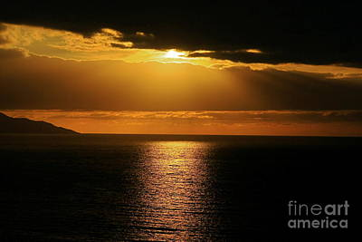Art Print featuring the photograph Shining Gold by Nicola Fiscarelli
