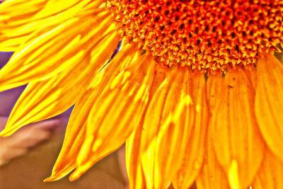Digital Sunflower Photograph - Shining Sunflower by Christy Patino