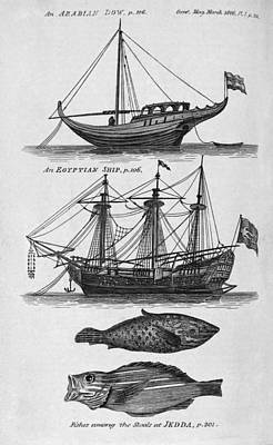 Ships And Fish From The Red Sea, Artwork Art Print by Middle Temple Library