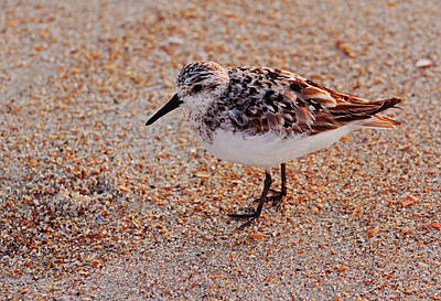 Photograph - Shore Bird At Sunrise by Sandi Blood