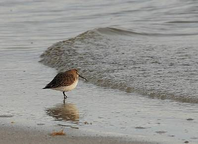 Photograph - Shore Bird by Kirk Stanley