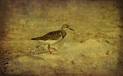Photograph - Shore Bird by Sandy Keeton
