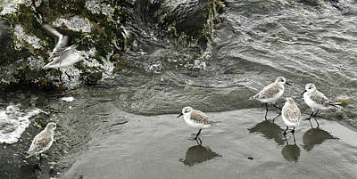 Photograph - Shore Birds by Frank Winters