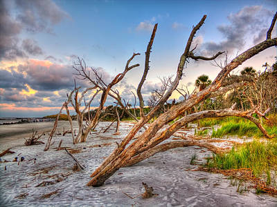Photograph - Shoreline Beach Driftwood And Grass by Jenny Ellen Photography