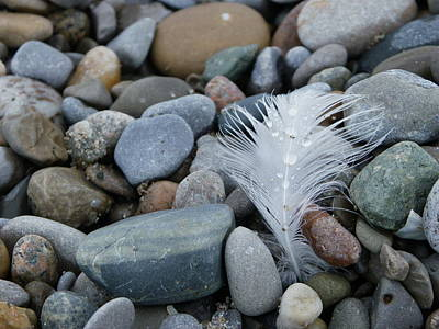 Photograph - Shoreline Treasures by Peggy King