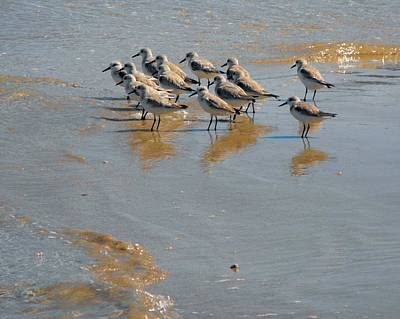 Photograph - Shorelines Sentinals On Guard For Dinner by William OBrien