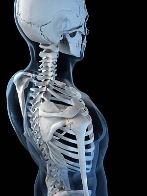 Human Joint Digital Art - Shoulder Anatomy, Artwork by Sciepro