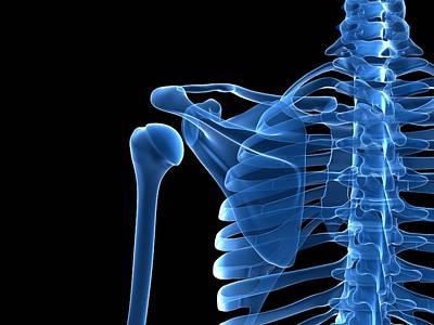 Human Joint Photograph - Shoulder Bones, Artwork by Sciepro