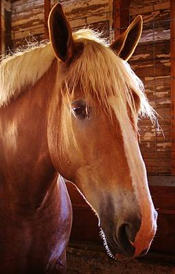 Photograph - Show Horse by Bruce Bley