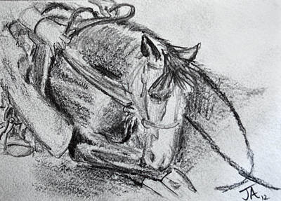 Drawing - Showing A 2yo by Jim  Arnold