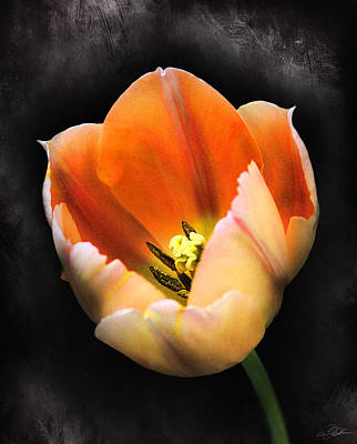 Tulips Digital Art - Showing Color by Peter Chilelli
