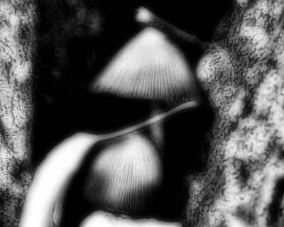 Shroom Magic Print by Mimulux patricia no No