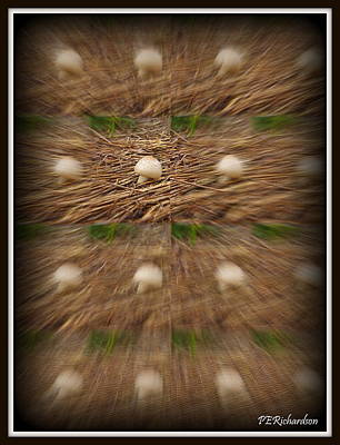 Shrooms Original