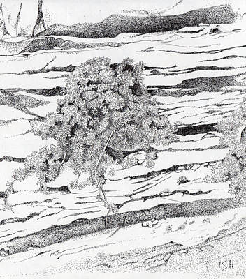 Drawing - Shrub In Sedimentary Rock by Inger Hutton