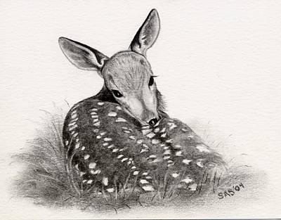 Whitetail Deer Drawing - Shy Boy by Sherri Strikwerda