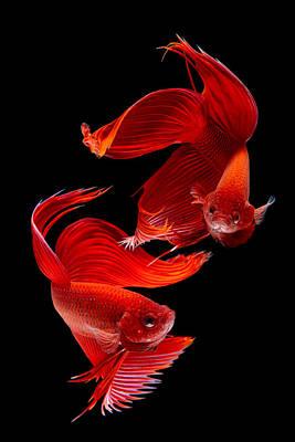 Siamese Fish Art Print