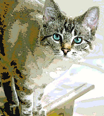 Siamese Mix Kitten Art Print by Dorothy Walker