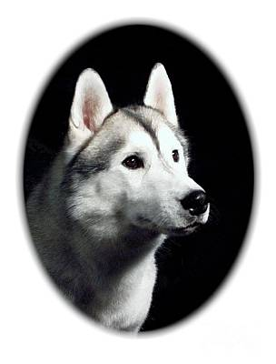 Siberian Husky Digital Art - Siberian Husky 271 by Larry Matthews