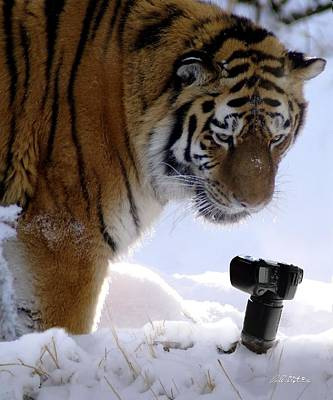 Siberian Photography Original by Bill Stephens