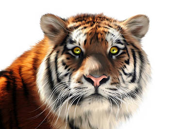 Tigris Digital Art - Siberian Tiger On White by Julie L Hoddinott