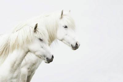 Side Face Of Two White Horse Art Print by Gigja Einarsdottir