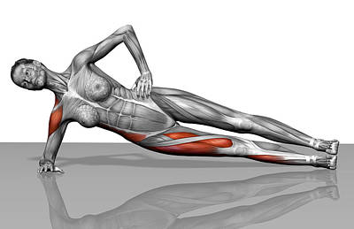 Photograph - Side Plank Exercise by MedicalRF.com