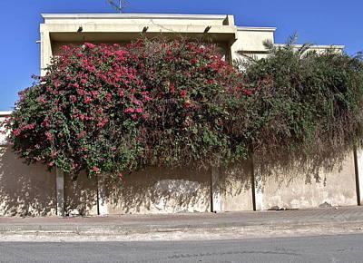 Sidewalk Florae In Doha Art Print by David Ritsema