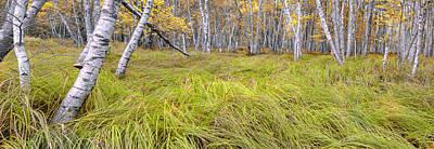 Photograph - Sieur De Monts Forest - Acadia National Park by Expressive Landscapes Fine Art Photography by Thom
