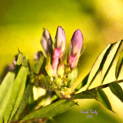 Pink Photograph - Sign Of Spring by Trish Tritz