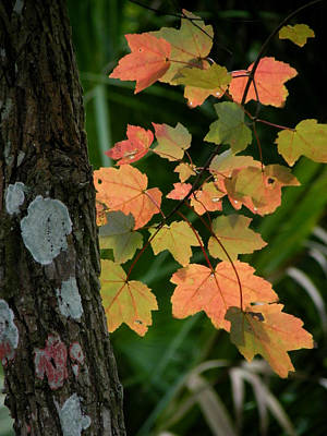 Photograph - Signs Of Fall by Judy Wanamaker