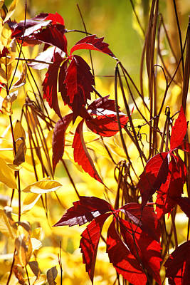 Leaf Photograph - Signs Of Fall by Marilyn Hunt