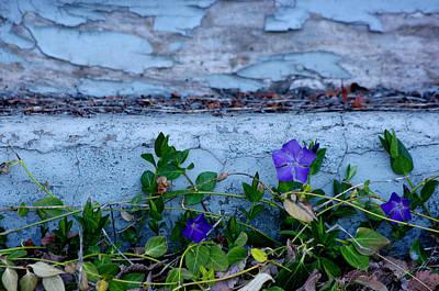 Fort Bayard Photograph - Signs Of Spring by Vicki Pelham