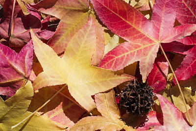 Vivid Fall Colors Photograph - Signs Of The Season by Heidi Smith