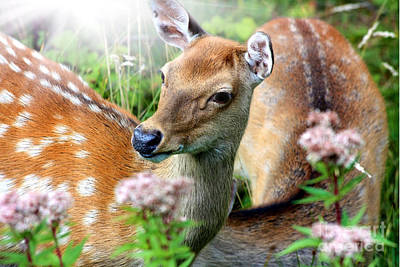 Sika Deer In The Wild Art Print by Simon Bratt Photography LRPS